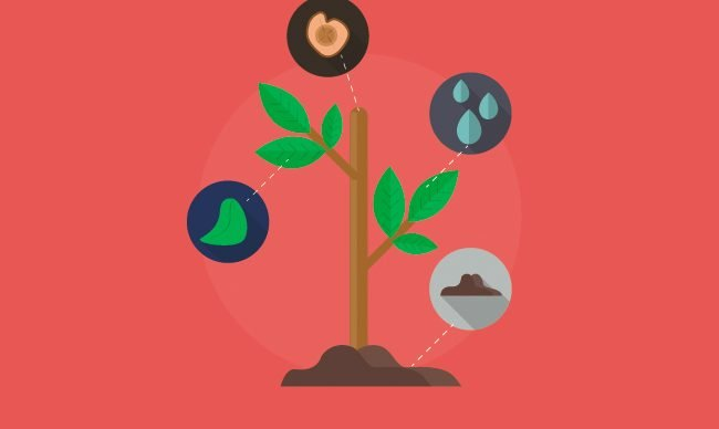 Плодовые деревья